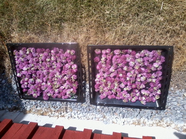 1clover drying