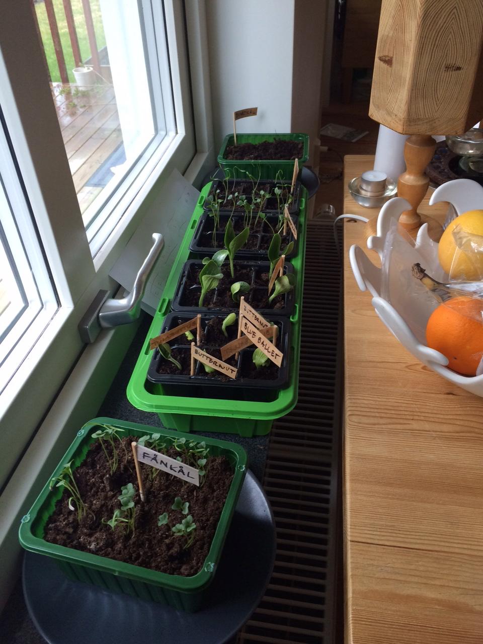 farming pre plant